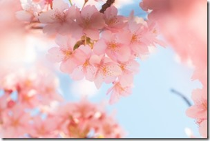 結婚式準備と結婚式写真は福岡ブライダルビデオ.com